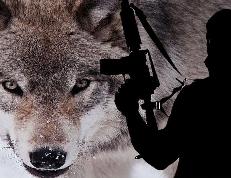 मुस्लिम चरमपंथी कर सकते हैं लोन वोल्फ अटैक (Lone Wolf Attack), यूएन ने दी चेतावनी